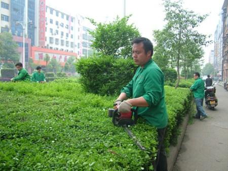 园林职工对绿化苗木进行机械修剪