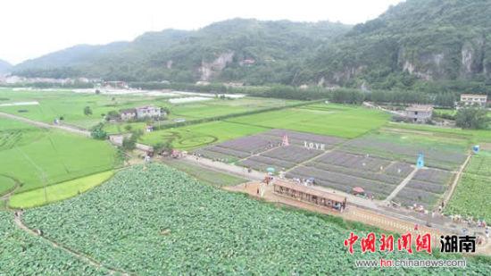 风景如画的辰溪稻田公园。