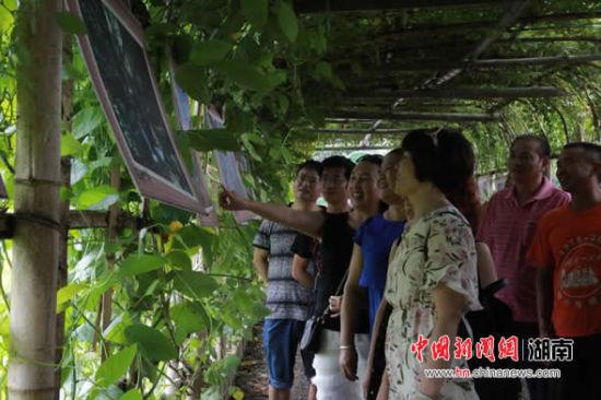 游客在辰溪农村体验乡村游。