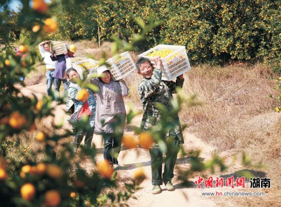 """江西南丰长沙推介""""桔园游""""邀游客赴蜜桔盛宴"""