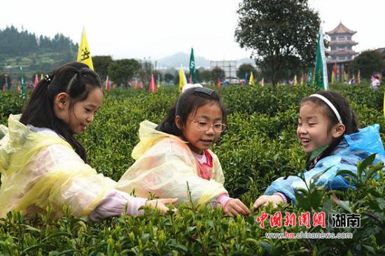 小游客体验采茶。