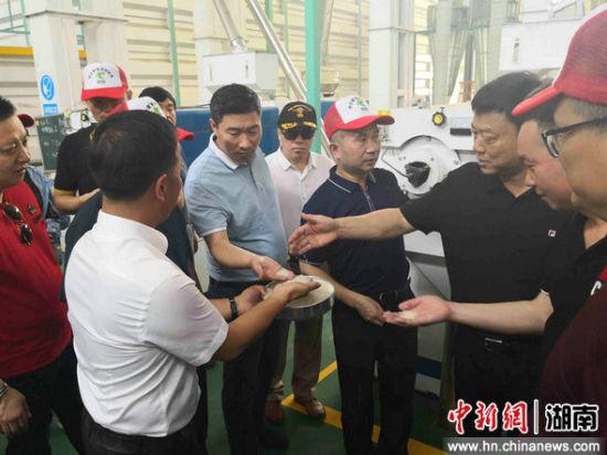 """香港、深圳的客商考察""""南洲稻虾米""""生产过程。"""