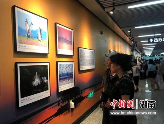 乘客驻足欣赏摄影展。
