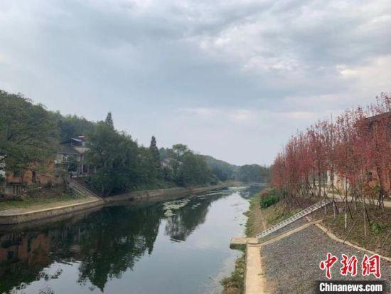 高桥镇金桥村边金井河清澈见底。 鲁毅 摄