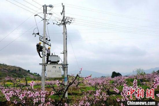 国网芷江县供电公司开展农网改造升级。 刘章 摄