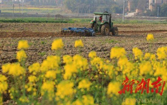 2月23日,衡阳县关市镇汇水村,村民驾驶耕种机在田间劳动。 曹正平 刘欣荣 摄