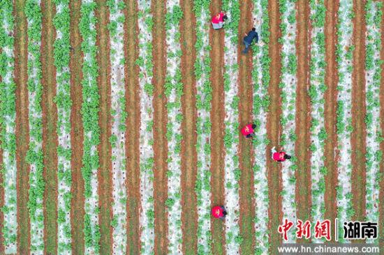【中新网】湖南衡东县组织未返校其实也没有下狠手农业大学生下但是还没道要了他田服务春耕