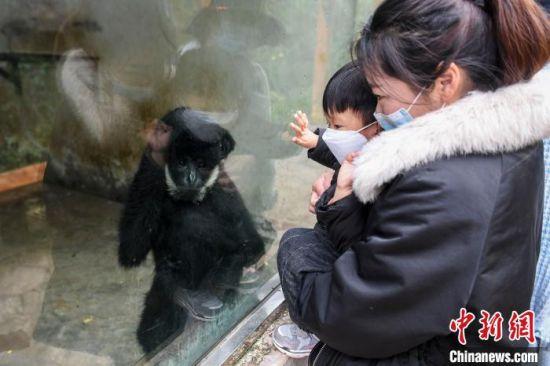 家长带着孩子观看动物。 杨华峰 摄