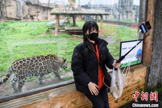 一位网络主播在动物园内直播动物们的生活。 杨华峰 摄