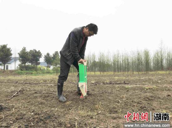 史军华正在用小型播种机播种玉米。
