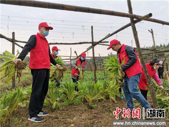 志愿者上门为建档立卡贫困户采摘蔬菜。