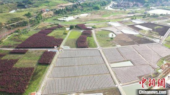 永州新田县黄沙溪村流转近400亩土地发展木耳产业。新田县供图