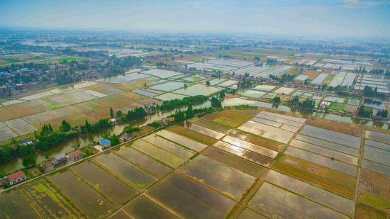 南县万亩小龙虾种苗繁育基地。