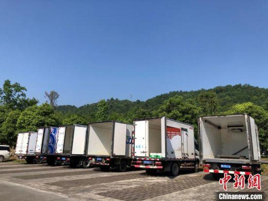 6台冷藏车整装待发。 吴东林 摄