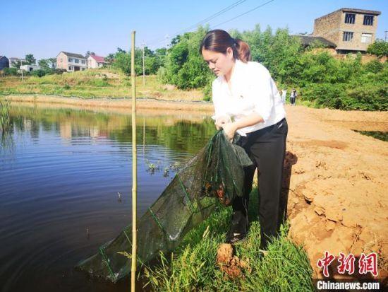 刘婵拉起小龙虾地笼。 刘曼 摄