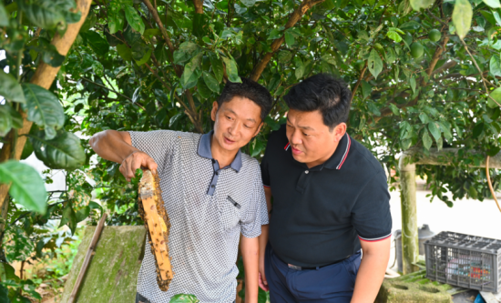 姜伟与阳红旗交流养蜂技术