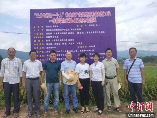 """江永""""超级稻+再生稻""""示范基地单产再创新高。江永县农业农村局供图。"""