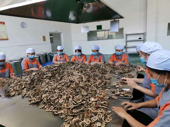 安仁一药企枳壳加工车间。安仁县委宣传部供图