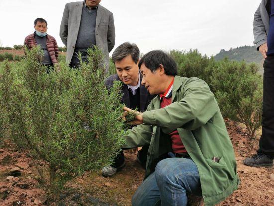 县委副书记、县长向恒林(中)调研特色化农业工作。