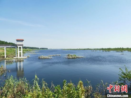 东洞庭湖湿地。 鲁毅 摄