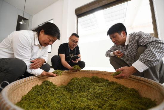 来自衡阳县溪江乡的彭国兰(最左)前来长健高山有机茶叶基地考察学习。