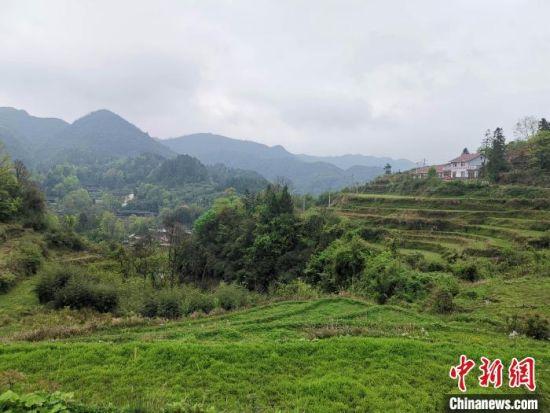 平均海拔1100米的向家地村云雾缭绕景色宜人。 付敬懿 摄