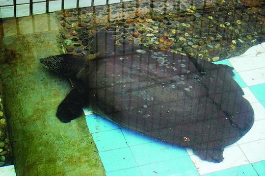 长沙动物园海豚患上急性肾衰竭
