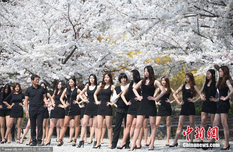 韩国模特樱花树下训练 秀长腿与花比美