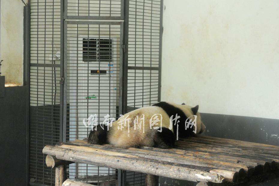 长沙生态动物园--湖南新闻图片网