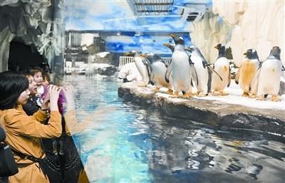 长沙海底世界迎来8只南极企鹅