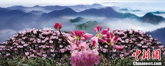 中国郴州莽山杜鹃花节开幕