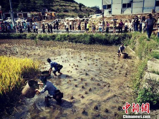湖南凤凰以乡村文化游探索