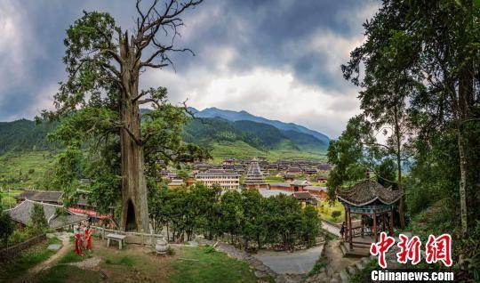 """湖南城步县1600岁杉树被评为""""湖南树王"""""""