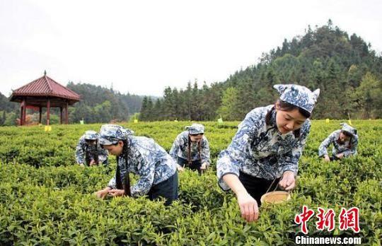 安化黑茶文化节10月启幕 中蒙俄共论万里茶道复兴