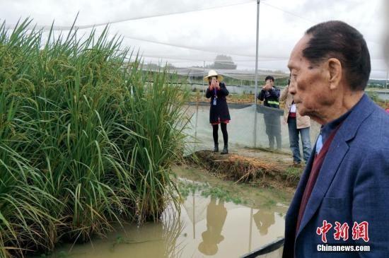 """""""杂交水稻之父""""袁隆平:见证一粒种子的改革开放史"""