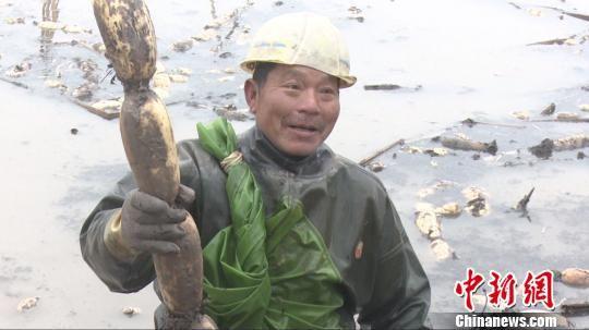 综合种养助农增收 最新白菜网送彩金南县农民挖藕日进六百