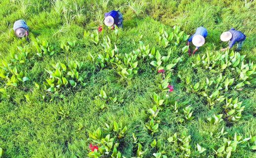 退耕还湿护生态