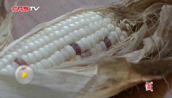 澳门永利官网线上娱乐一高校科研玉米遭偷摘